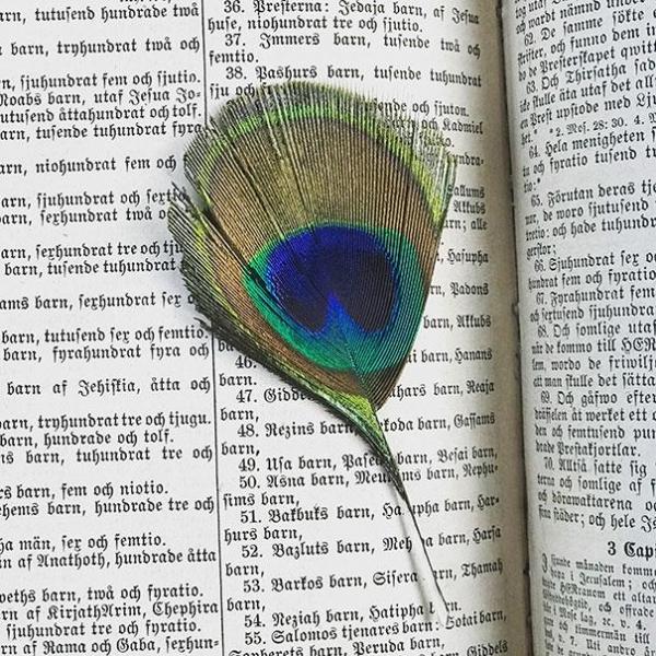 20 необычных предметов из старых книг, куда их положили другие читатели